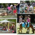 Organisation de la fête de la ville - fête de l'été