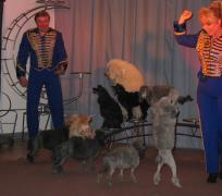spectacle de chiens